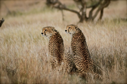 Dispatch from Kenya: Sirikoi Lodge, Lewa Conservancy